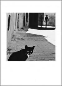 """#23. Тунис, 2010, цикъл """"Тя"""" пигментен отпечатък, 70 x 50 см., рамка цена: 220лв."""