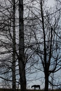native-bg_ivelina_berova- (9)